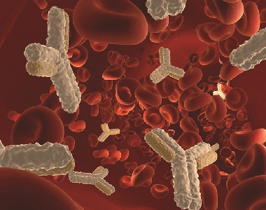 乙型肝炎病毒核心抗原抗血清(核心抗體)