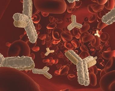 乙型肝炎病毒表面抗原抗血清(表面抗體)