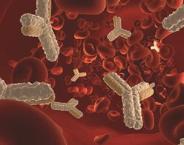 血管緊張素II(AII)抗血清
